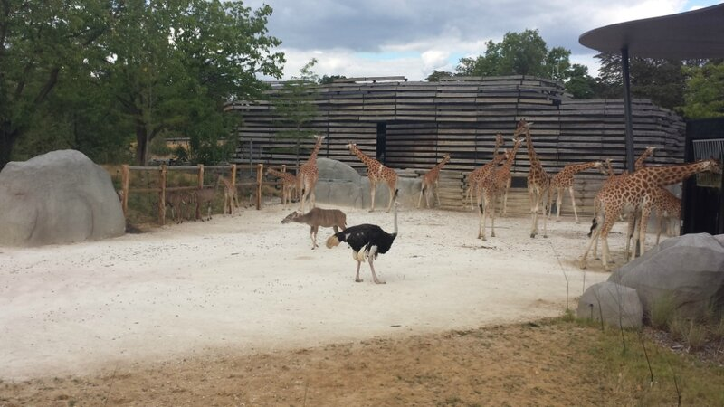 zoo_girafes_and_co