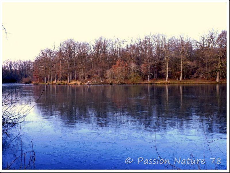 L'étang d'or en hiver