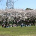Edogawa-ku Hanami 2008 - 3