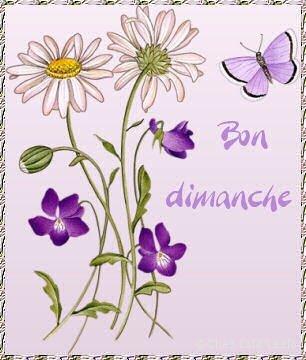 gif-bon-dimanche-fleur-mauve
