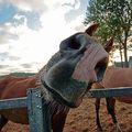 FUNNY HORSES (14)