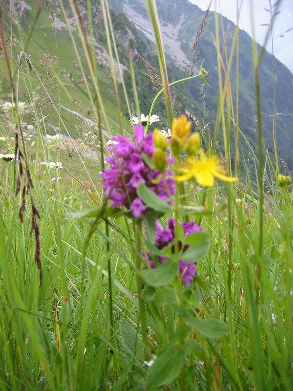 Savoie été 2005