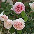 Bouquet du dimanche
