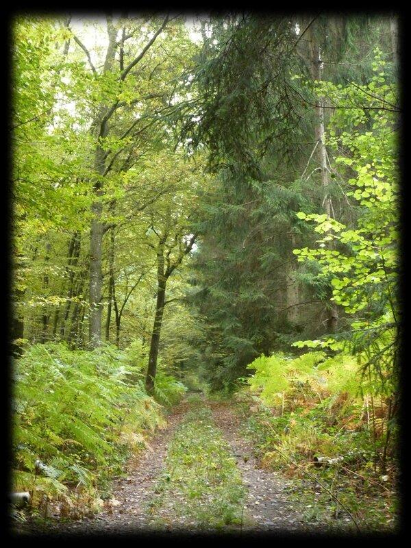 1 forêt