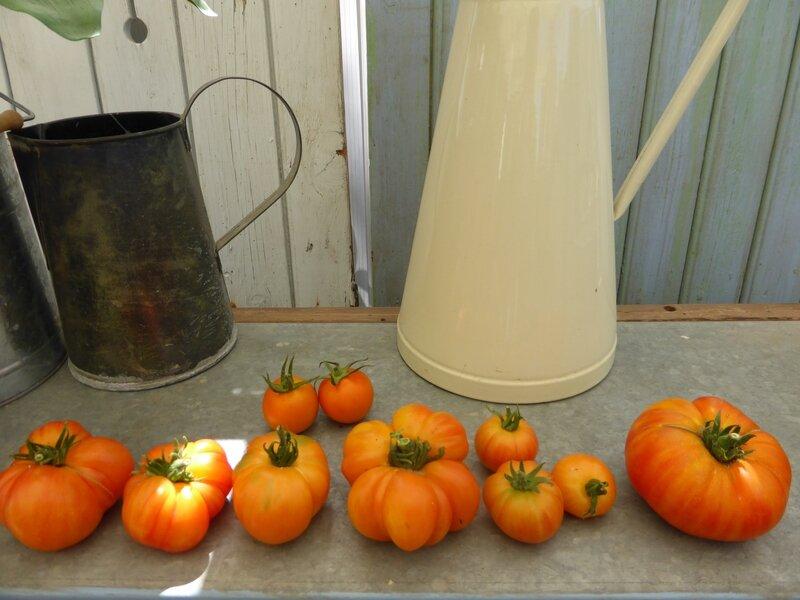 13-tomates du jour