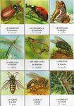 cartes_insectes_1