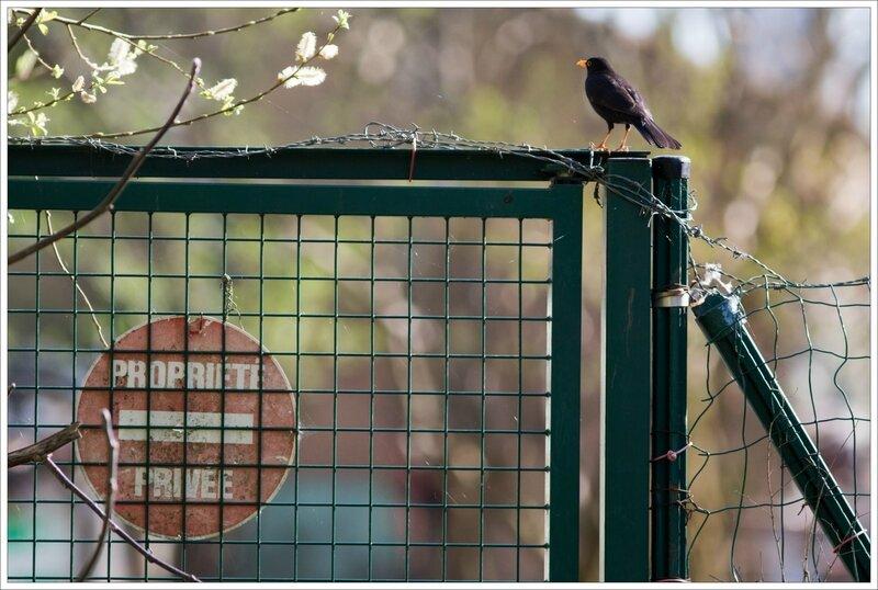 ville oiseau merle panneau propriété privée 2 300317