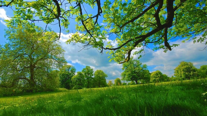 summer-grass-trees-green-branches-sky-natural-beauty-1920x1080