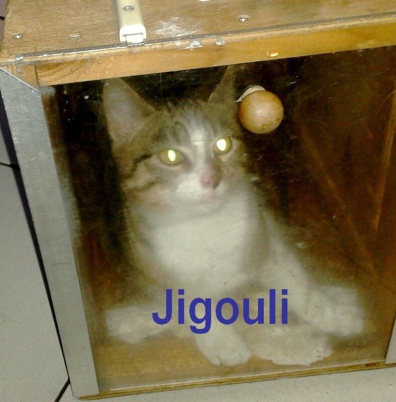 jigouli_2