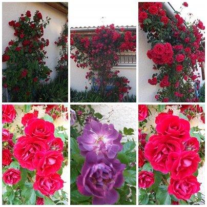 Ciel 10 06 & fleurs (10)