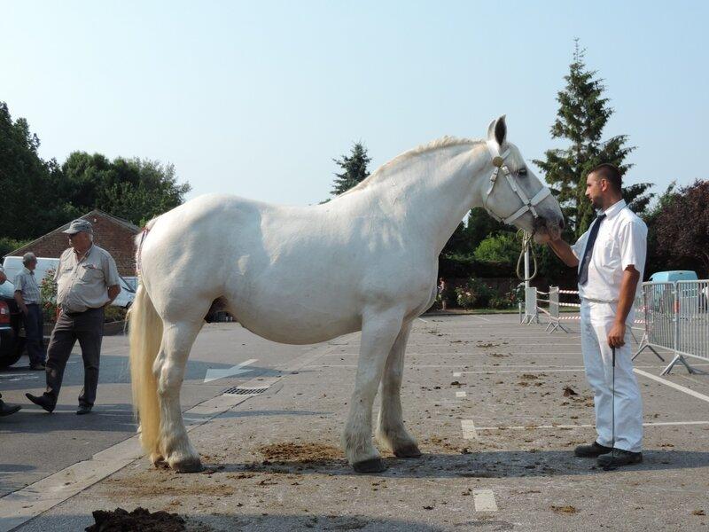 Rikita de l'Ecurie - 20 Juin 207 - Concours élevage local - Thérouanne (62) - 1ere (Non Poulinées)
