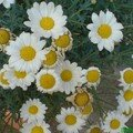 fleurs de ma cour