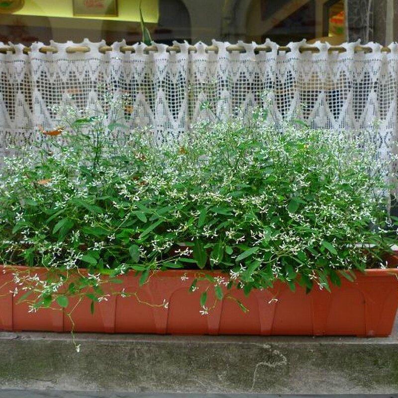 aaaaaa vasques et jardinières11-001