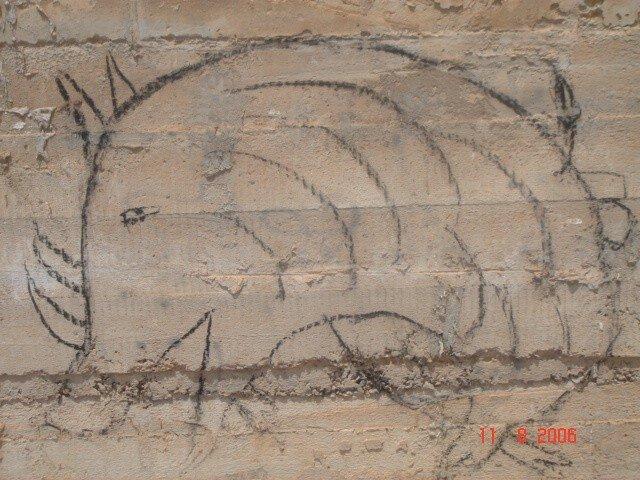 36 Sidi Ifni Le Porc