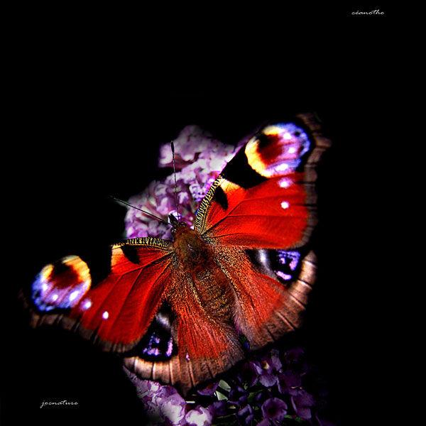 120921_couleurs_de_papillon_5
