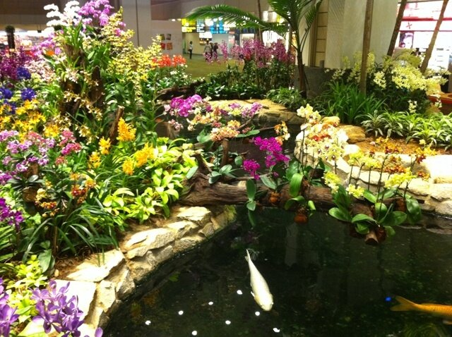 Jardin des Orchidées Singapore airport8 - Photo de ...