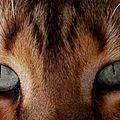 Kit cats (2)