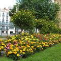 Fleurs 2008