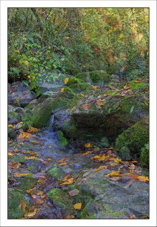 Ruisseau Puits Denfer feuilles 311011