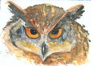 cape-eagle-owl