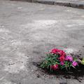 Colombia road market, et un jardinier hors du commun