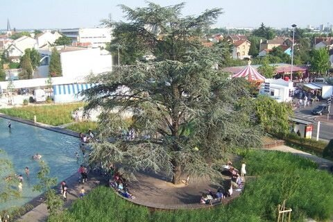arbre aux palabres