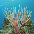 corail 247