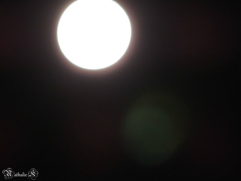 © Photo NIKON P510 Nathalie K_ 14 novembre 2016_ DSCN0955