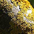 B de lisette #4 - lichen