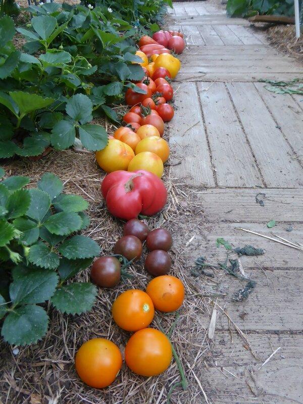 2-tomates (4)