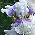 iris rose linda vasquez