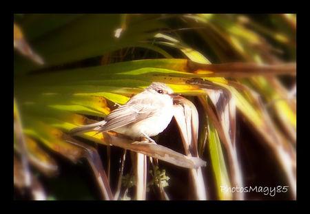 141_visiteurs_jardin_lu_on_ao_t_2011_1