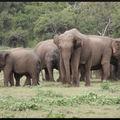Enfin là, les éléphants du gourma !