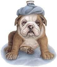 chien malade bacterie