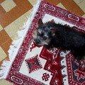 DIDI REGARDE MAMINOU JUILLET 2007