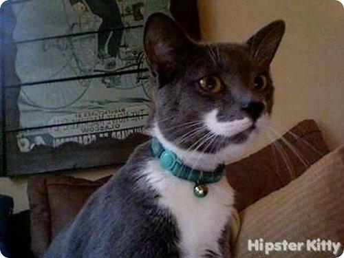 chat_moustache_017