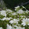 Une flore magnifique