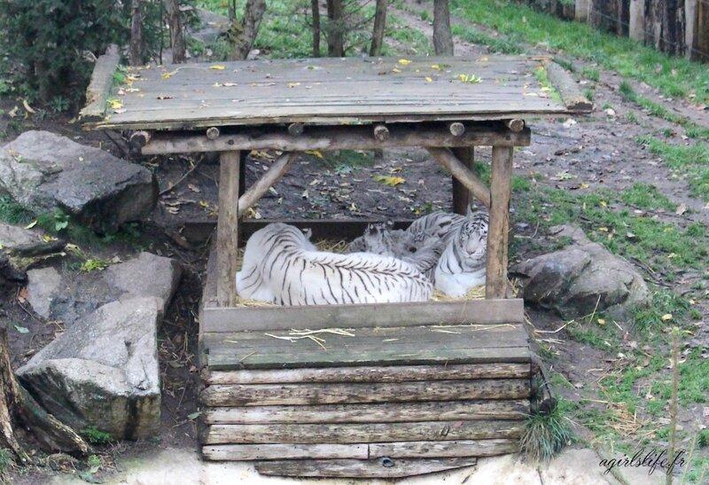Amneville zoo 4