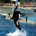 Ouha ! Quel saut ! Bravo!!!
