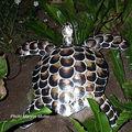 Tortue faite avec des coquilles d'huitres perlières de tahiti.