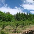 2008 05 18 Les pêcher en Ardèche
