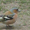 G) Les Oiseaux
