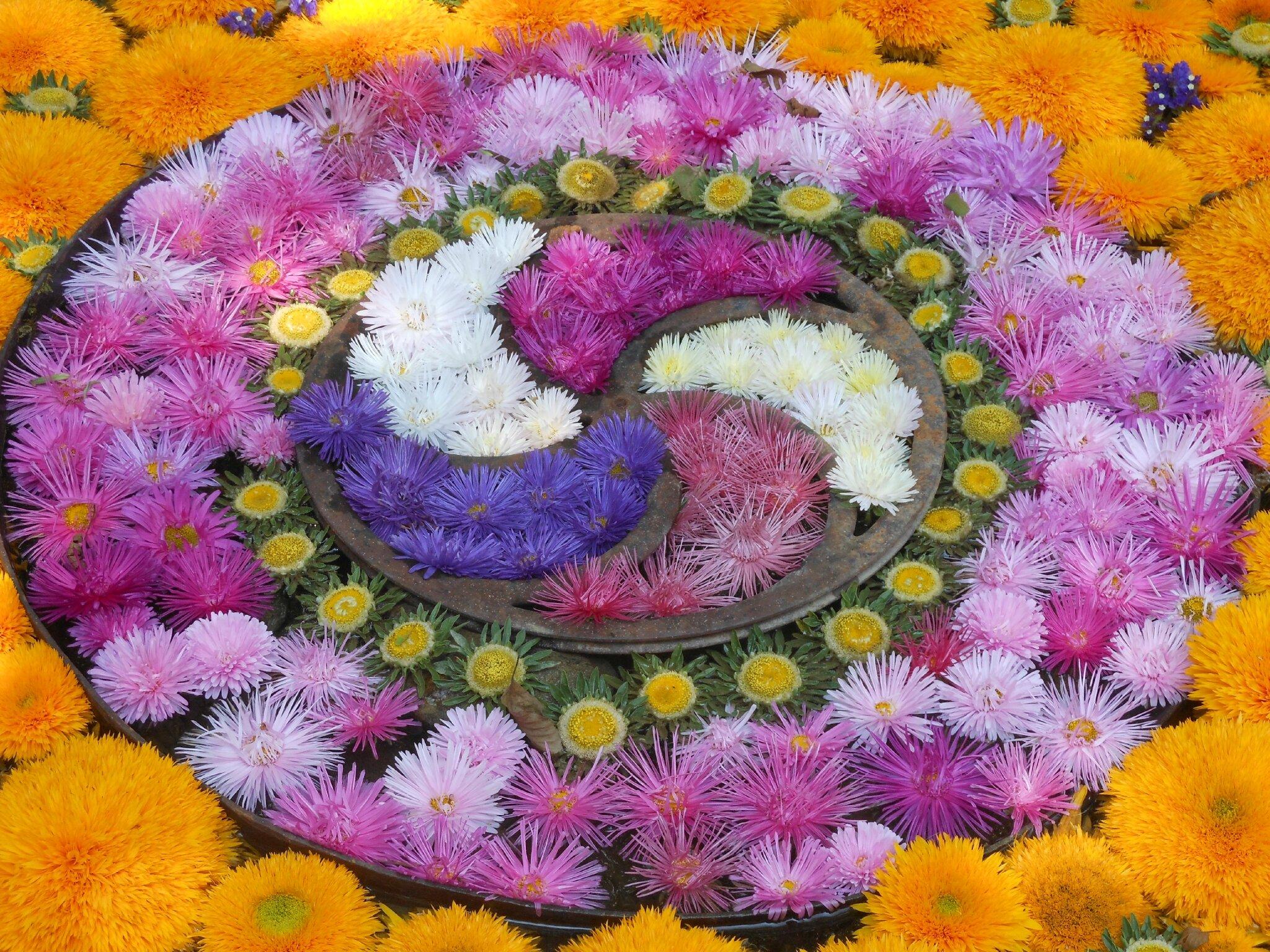 Mandala de fleurs jardin de lieurac fleursdevero2 for Le jardin des fleurs