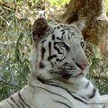 bannergetta zoo, dec 09 (44)