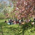 Central park : le poumon de manhattan