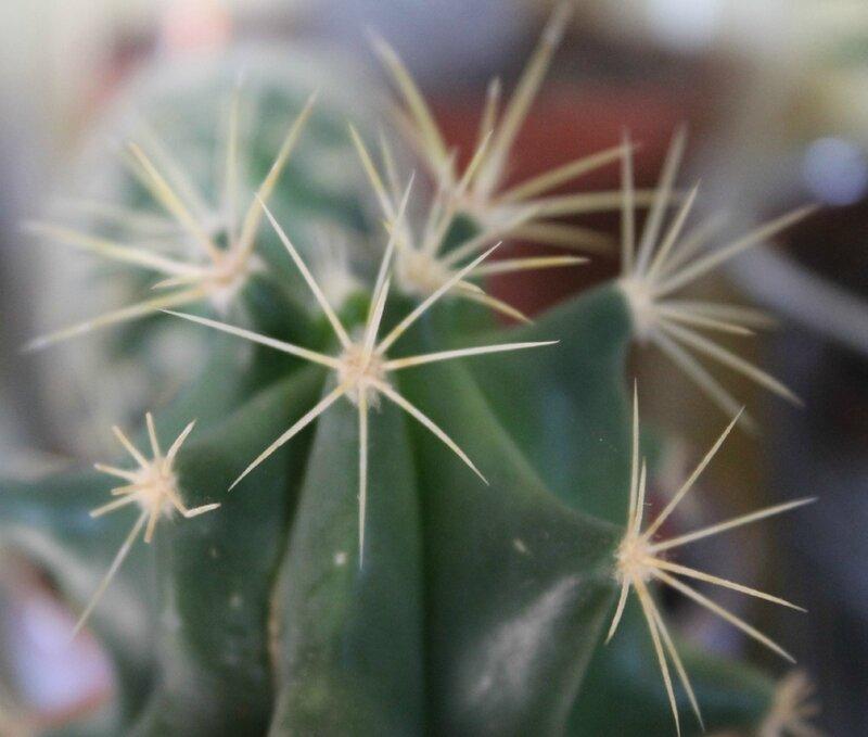 cactus14