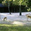 Au pays de bambi