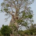 u-Sénégal