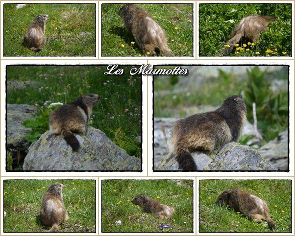 Mes amies les Marmottes