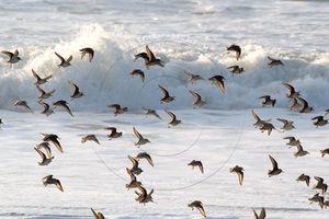 vol_oiseaux_contre_jour_sab_801a9